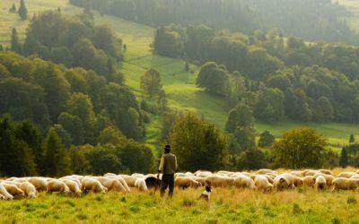 Do We Know the Shepherd